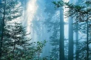 这天。。挺热。。来首清新的 :森林晚歌-古の森