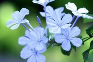 每个人都是世界的唯一,所以我们更加要珍惜自己:世界上唯一盛开的花