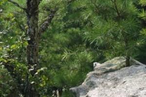 进入爱尔兰丛林中的美景:《Green Woods》