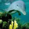 写给那些无辜死去的海豚及海鲨:在那个世界,没有杀戮