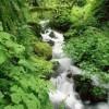 来自大自然的声音:恬静、亲切、唯美。