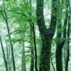 来自大自然的音乐:《小夜曲(Serenade)》