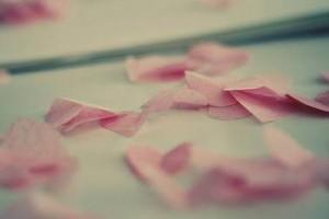 轻轻柔柔的琴声:《风将记忆吹成花瓣》