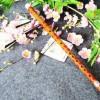 如山中洁白的雪莲花,无瑕,珍贵:《遇上你是我的缘-竹笛》