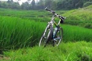 骑上单车,去乡间欣赏沿途的风景,享受那种温暖的感觉