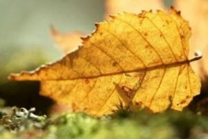 也许我错过了秋叶静羌,但终究会迎来冬日阳光 :《Autumn Leaves》