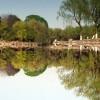 樱花般令人惊叹而稍纵即逝的光华:《镜花水月の桜--Oiko》