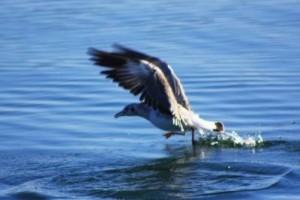 洁净的自然、和煦的阳光,透过林荫:《水的季节鸟》