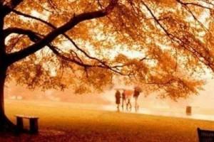凉凉的秋风与流水,像是婉转跳跃的音符:《黄金の秋》