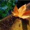 纵使是美丽如斯,也总会有凋谢的一天:《凄美的吟唱》