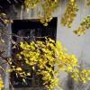 我爱秋天的凄凉和感怀,也爱秋天里的期望和童话:《秋天的旅程》