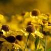 十二月的雏菊,在静静的等待着什么:《A Daisy in December》