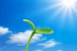 阳光凑热闹似的赶过来:《forever永远》