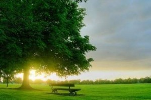 单纯清澈的音符,一如清晨透明的阳光,让人心情喜悦而美好:《早上好》