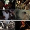 舌尖上的中国2-高清下载-迅雷下载-720p下载