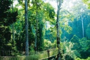 自然之声和人类乐器的完美协奏:《自然之声 雨林 深处》