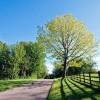 静心音乐、森林音乐:《A Path to Solitude》