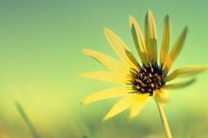 春的旋律:《Mallow Flower - otokaze》