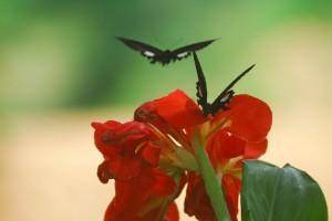 分分合合,撞撞跌跌:《Butterflies And Flower》