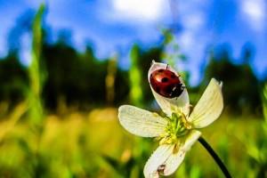 聆听欢快的春日阳光