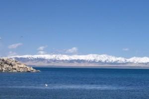 陪我到可可西里去看海-大冰