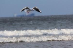 倾听海的声音《誰もいない海》