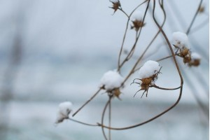 雪中等我的那个人:《初雪》