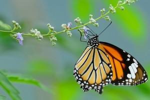 《나비가 되고 싶어-想要成为蝴蝶》