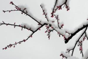 梅须逊雪三分白,雪却输梅一段香:《织女 心丝(笛箫版)》