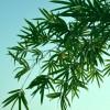 拼凑不出完整的画面:《Bamboo》