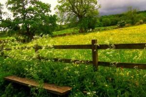 蛐蛐在鸣,月下嬉戏:《Foxtail-Grass Studio - 秋鸣りシンフォニー》