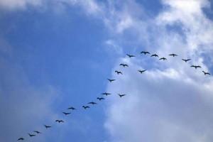 催眠曲:《birds over the rainbow》