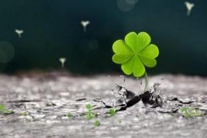 四叶草是这个世界最幸运的符号:《四月草的幻想》