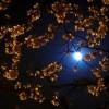 轻音乐:《城里的月光 》