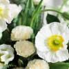 甜到溢出来:《Pretty Flowers》