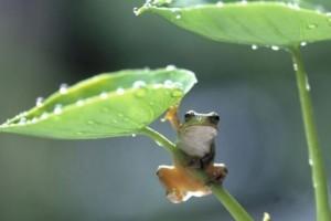 六月的稻花香:《雨垂れ拍子は誰が為に 》