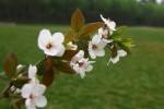 一片安详与静谧:《春景》