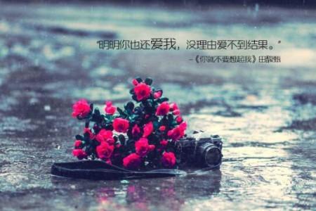 明明你也很爱我,没理由爱不到结果:《你就不要想起我》无损下载