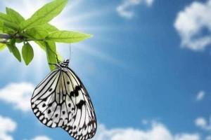 轻音乐版:《梦中的蝴蝶》