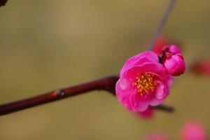 春来花自青,秋至叶飘零:《Petra 》