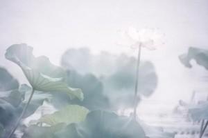 倚天屠龙记插曲:《似水柔情》