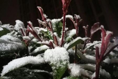 2018年的第一场雪:《恋雪》