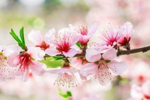 欢快的心情,希望明天顺利:《春之行》