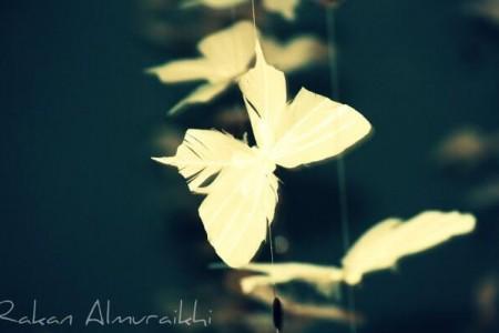 花儿开过美丽过,旅人欣赏过惊艳过:《花梦旅人》