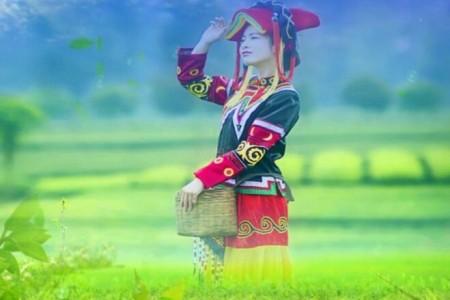 一个葫芦,一根竖竹:《阿里山的姑娘》
