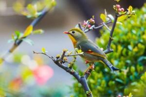 江南的鸟语花香:《江南风光》