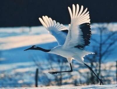 贴近大自然的感觉,清新,惬意:野鸟情歌