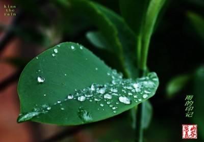 最静心的钢琴曲:雨的印记 kiss the rain