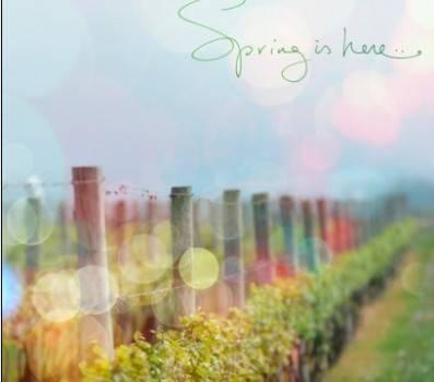 缠缠绵绵;最后也是华丽褪去,弦停曲闭:《春去又来》