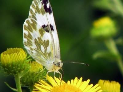 温暖,不一样的感动,你在聆听吗?:《Le Papillon Et La Flute》